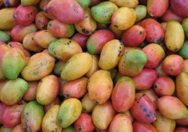 Top 10 Mango Producing Countries