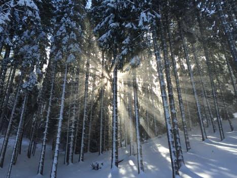 """The pine stays green in winter... wisdom in hardship"" - Norman Douglas"