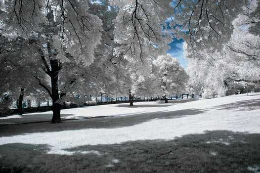 """""""If Winter comes. can Spring be far behind?"""" - Percy Bysshe Shelly"""