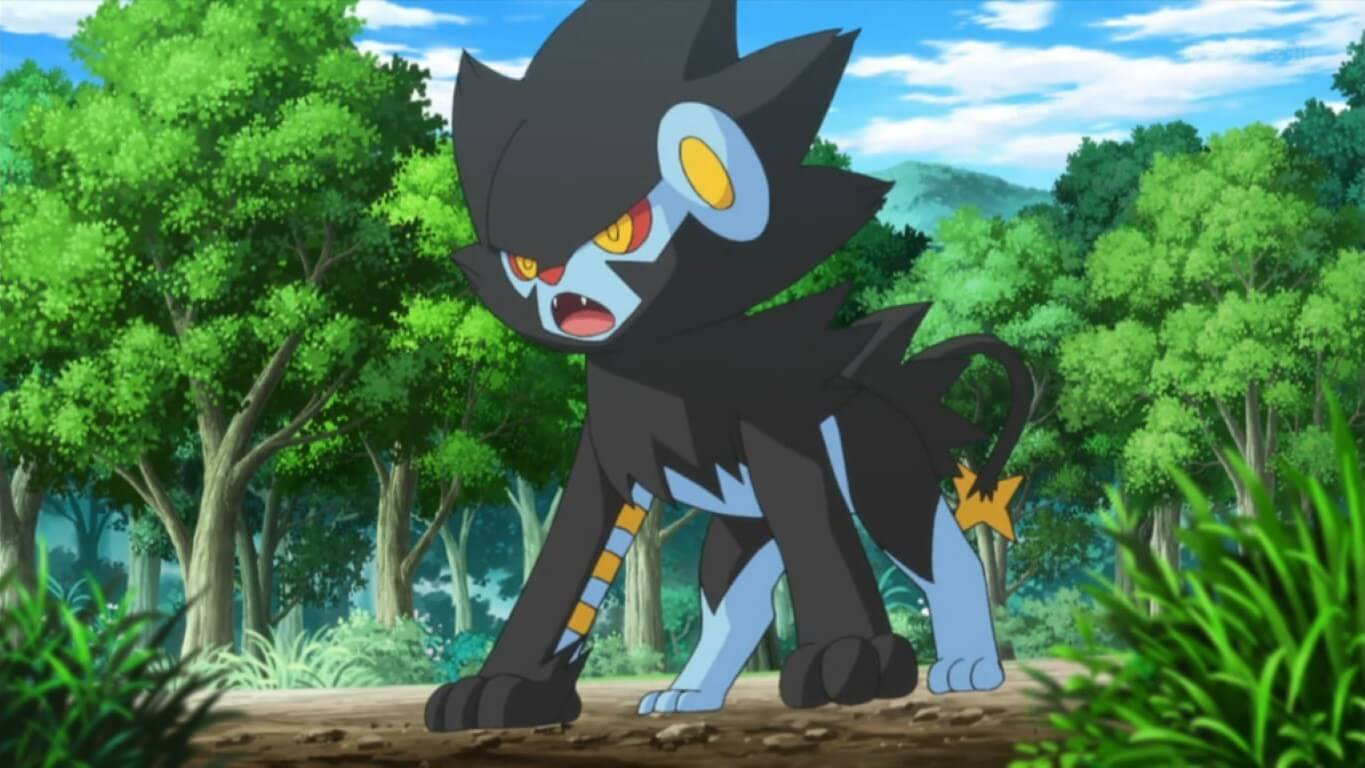 Shinx and LuxraY Cat Pokemon